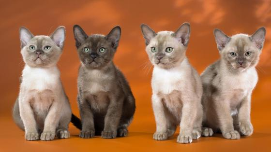 Four cats wallpaper