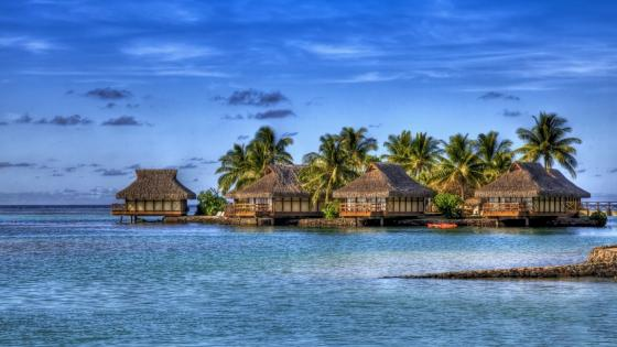 Overwater bungalows with palms in Maldives wallpaper