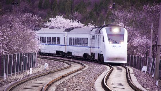 Sakura blossom in the Japan Rail Pass wallpaper
