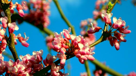 Blossom wallpaper