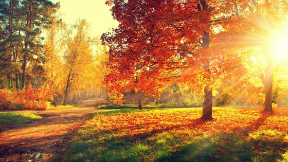 Autumn sunshine wallpaper