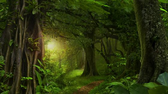 Morning sunlight in the green forest wallpaper