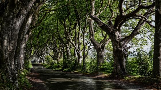 Tree lined road wallpaper