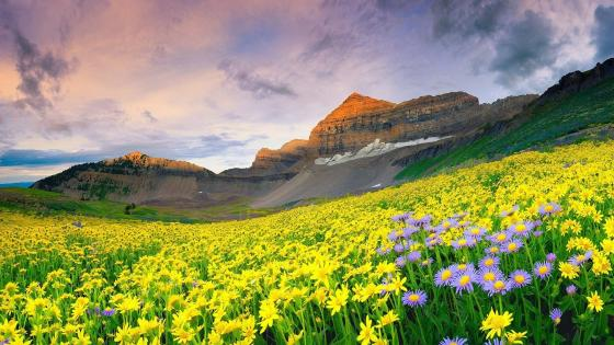 Valley of Flowers National Park wallpaper