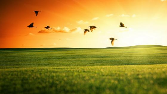 Flying Birds in the field wallpaper