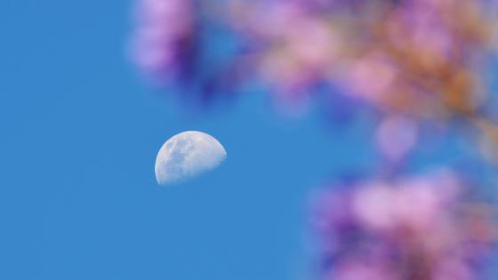 Flower moon wallpaper