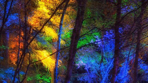Colorful forest wallpaper