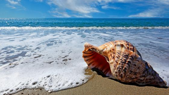 Seashell in the foamy waves wallpaper