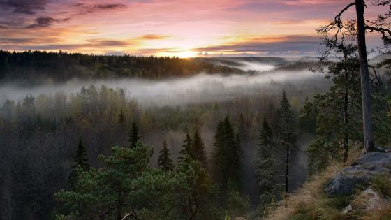 Misty morning in Nuuksio National Park, Finland wallpaper