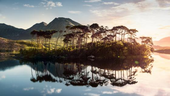 Pine Island on Derryclare Lough (Connemara National Park) wallpaper