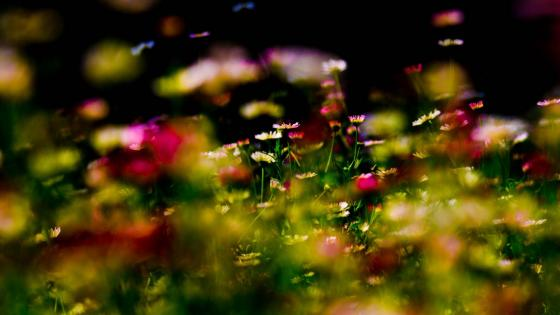 Colorful wildflowers wallpaper