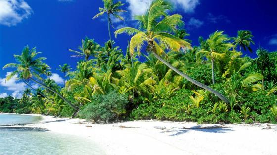 White sandy beach with palms wallpaper