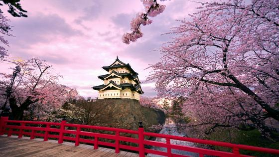 Hirosaki Castle at spring wallpaper