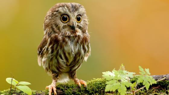 Cute owl looking toward wallpaper