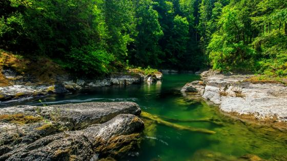 Cowichan River wallpaper