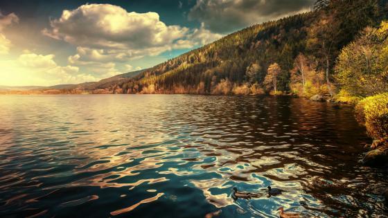 Lake at fall wallpaper