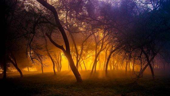 Magic atmosphere among trees wallpaper