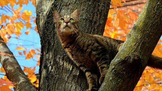 Cat on a tree wallpaper