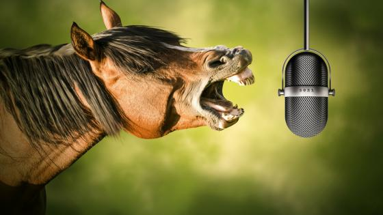 Horse with a microphone wallpaper
