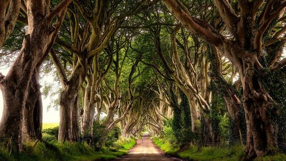 The Dark Hedges wallpaper