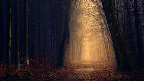 Long path in the dark forest with light at the end wallpaper
