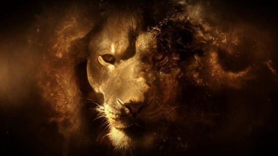 Lion face - Digital art wallpaper
