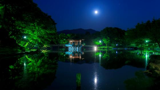 Nara Park at night (Japan) wallpaper