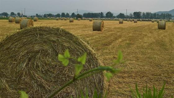 Hay bales wallpaper