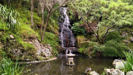 Wellington Botanic Gardens wallpaper