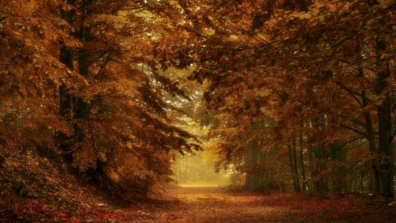 Fall forest path wallpaper