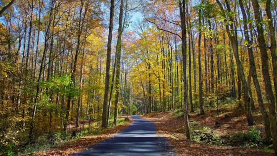 Road in the fall forest wallpaper