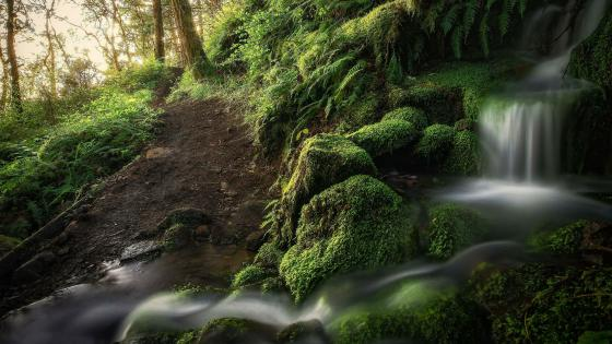 Waterfall on the mossy stones wallpaper