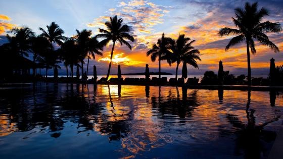 Palm trees in the sunset wallpaper