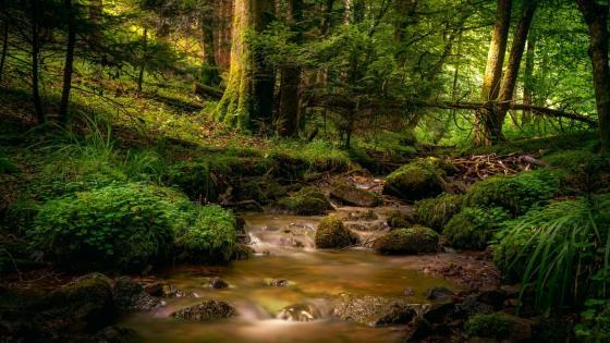 Forest creek wallpaper