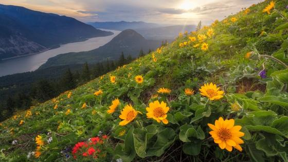 Dog Mountain (Columbia River Gorge) wallpaper