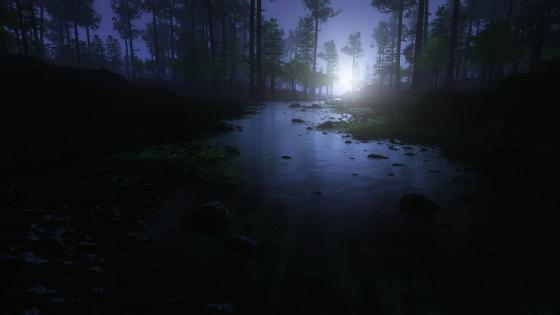Night forest wallpaper