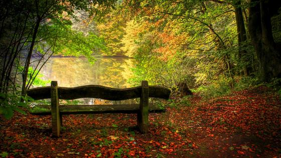 Lakeside bench under the fall trees wallpaper