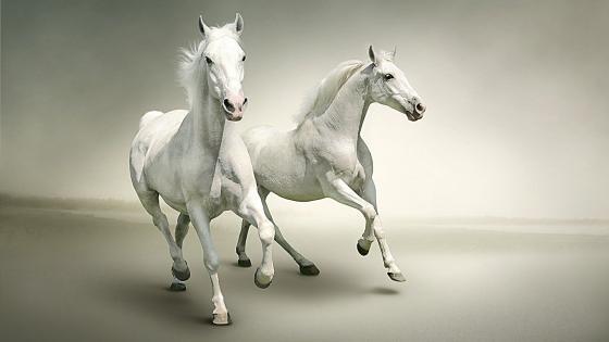 White horses wallpaper