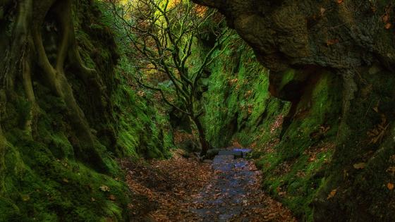 The Devil's Pulpit (Finnich Glen) wallpaper