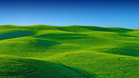 Rolling green hills and blue sky wallpaper
