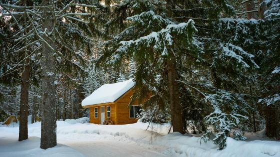 Winter forest cottage wallpaper