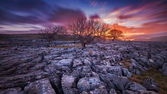 Dry trees on rocky field wallpaper
