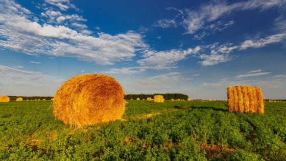 Hay straw wallpaper