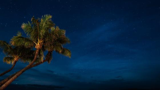 Palms under the starry sky wallpaper
