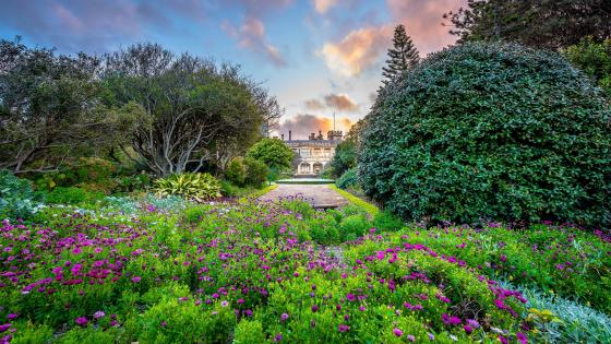 Royal Botanic Garden, Sydney wallpaper