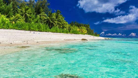 Tropical beach in Maldives wallpaper