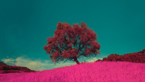 Lone pink tree in the middle of the pink field wallpaper