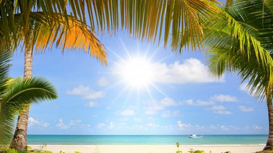 Sandy beach with palms wallpaper