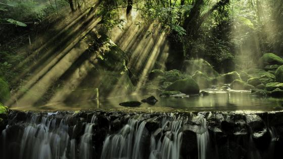 Sun rays in the rainforest wallpaper