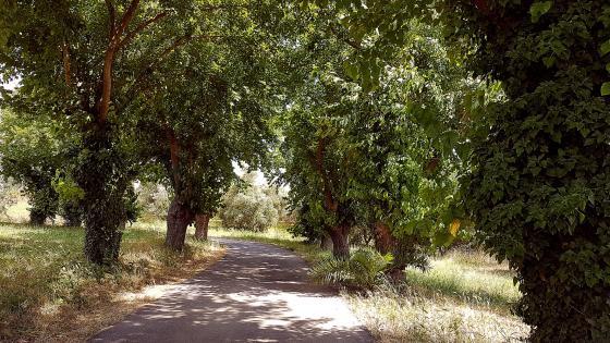 Path Trees wallpaper